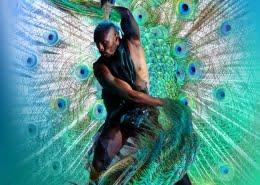 Artwork Peacock