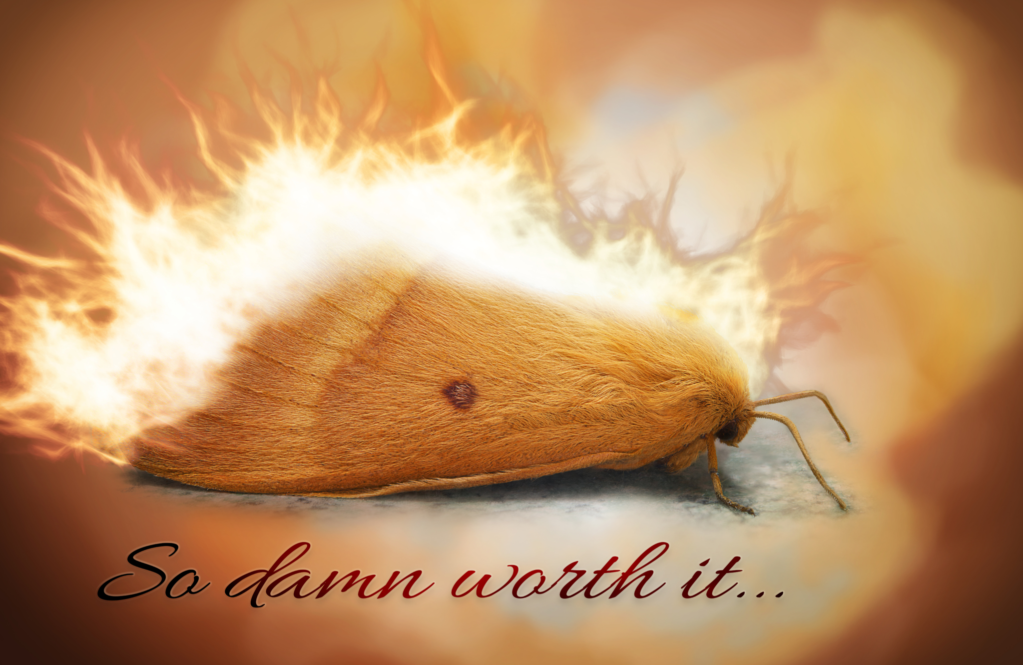 Moth in flames